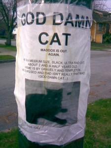 Lost Pets 04
